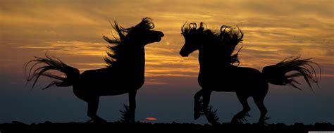 Horses 4k Hd Desktop Wallpaper For 4k Ultra Hd Tv • Wide