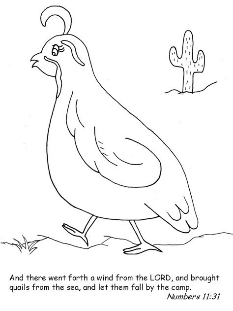 Coloring Quail by Quail Bible Coloring Pages Coloring Page Book For