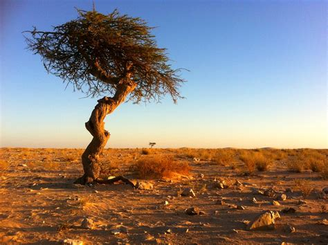 mauritania desert tree sunset nouadhibou camping