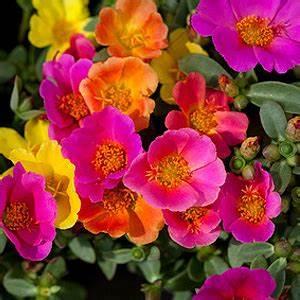 Winterharte Balkonpflanzen Bilder Balkonpflanzen Tipps Zur Auswahl