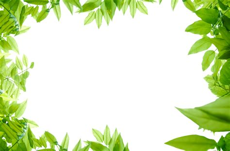 framing leaves free hd leaves png format