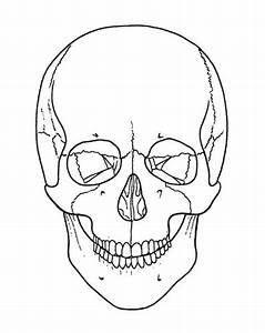Skull-a-day 4 0 - Tutorial