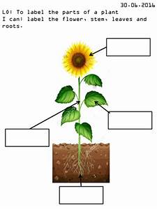 Label Parts Of Plant Worksheet By Mousemat007 - Teaching Resources