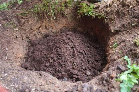 come piantare le in giardino come piantare le piante in giardino piantare le