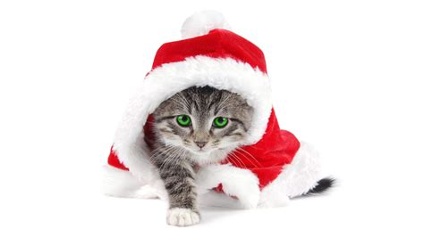 Christmas Cat  Free Download Cute Christmas Cat Hd