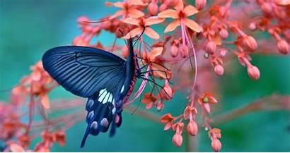 Butterfly 4k Flower Amazing Wallpapers Flowers Ultra