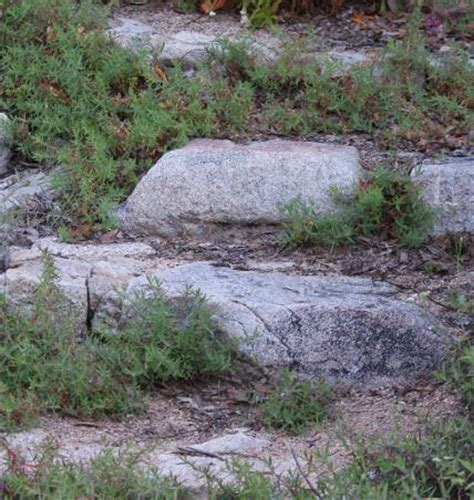 what to plant on a hillside to erosion gardenstep jpg size grid24 12