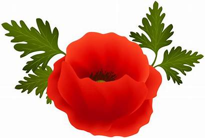 Poppy Clip Clipart Poppies Flowers Transparent Yopriceville