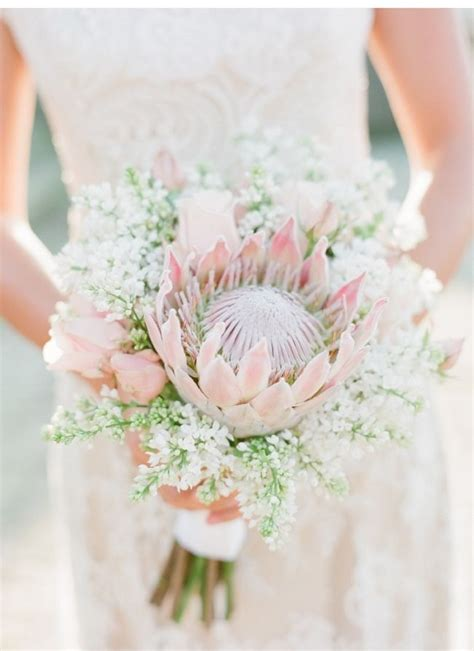 The 25 Best Protea Bouquet Ideas On Pinterest Burgundy