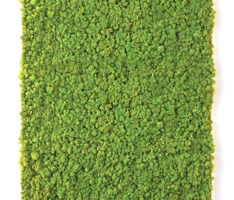 MOSS WALL - Living / Green walls from Verde Profilo