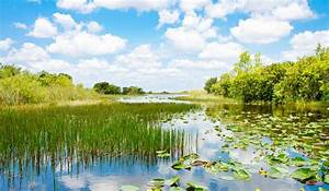 What Are The Major Threats To Wetland Ecosystems Around