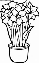 Coloring Flowers Flower Pages Printable Tropical Hawaiian Colouring Sheets Cliparts Nature Pot Clipart Drawing Drawings Sheet Found Popular sketch template