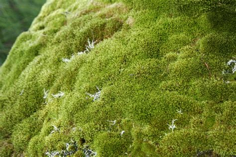 types of moss on trees identification what is the type of moss that commonly grows in dirt trees and bricks