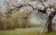 Free Spring Desktop Wallpaper Nature Lands…