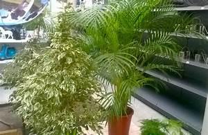 Plante Verte D Appartement : plantes d appartement ~ Premium-room.com Idées de Décoration