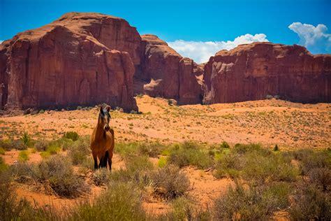 arriere plan du bureau fond d 39 écran rochers usa arizona utah cheval mustang