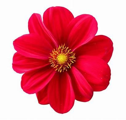 Flower Transparent Purepng App Library