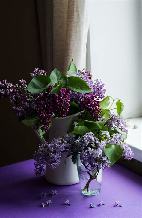 violet flowers decoration  room stock photo flowers