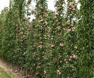 Pflanzen Sonniger Standort : s ulenobst sorten pflanzen und schneiden ~ Michelbontemps.com Haus und Dekorationen