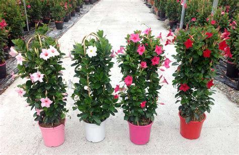 fleurs deuil d 233 c 232 s le fleurissement d obs 232 ques en 233 t 233 le fleursinfo