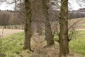 Holz Im Wasser Verbauen : natur erleben online natur erleben im kraichtal ~ Lizthompson.info Haus und Dekorationen