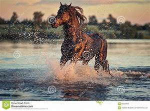 Horse Running Through Water Royalty-Free Stock Photography ...
