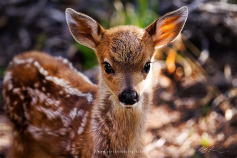 Baby Animals Wallpapers Free - baby deer wallpapers baby animals