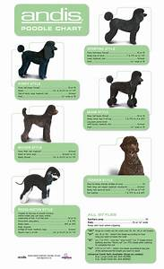 Andis Poodle Chart Grooming Guide Page 3 All Groom