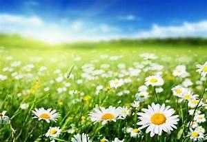 Was Sind Frühlingsblumen : fr hlingsblumen in t pfen in der vase und im garten ~ Whattoseeinmadrid.com Haus und Dekorationen