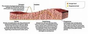 What You Should Know About Thin Endometrial Uterine Lining  U2014 Hope  U0026 Hopscotch