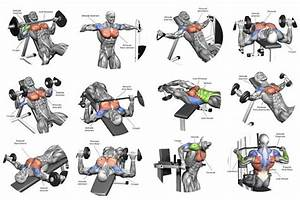 The Perfect Beginner U2019s Bodybuilding Program  With Images