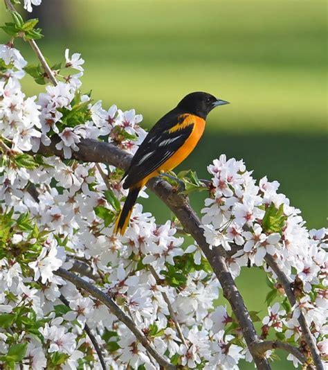 colorful birds  spring nature  wildlife pics