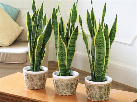 best small indoor plants low light best indoor house plants low light furnitureteams com