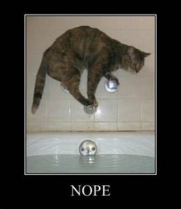 Cat Does Whatever It Takes To Stop Bath Time Demotivational