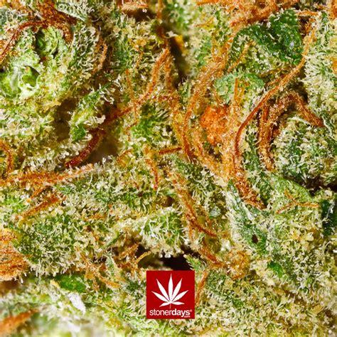 Marijuana Animated Wallpaper - marijuana wallpapers and screensavers wallpapersafari