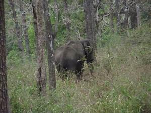 Indian Tour  April 2007