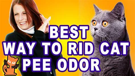 get rid of cat smell get rid of cat smell insider secrets to getting rid