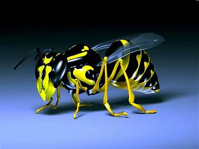 3d Cool Wallpapers Backgrounds Bee Robotic Desktop