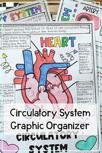 Circulatory System Graphic Organizer Review Activity Distance Learning