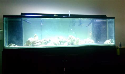 210 Gallon Tank Members Gallery Austin Reef Club