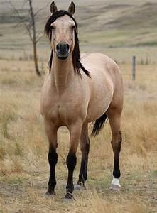 Horse Bit Chart Funny Horses Funny Horse Videos Funny Pets Funny Hors
