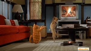 Cat Dancing GIFs - Find & Share on GIPHY
