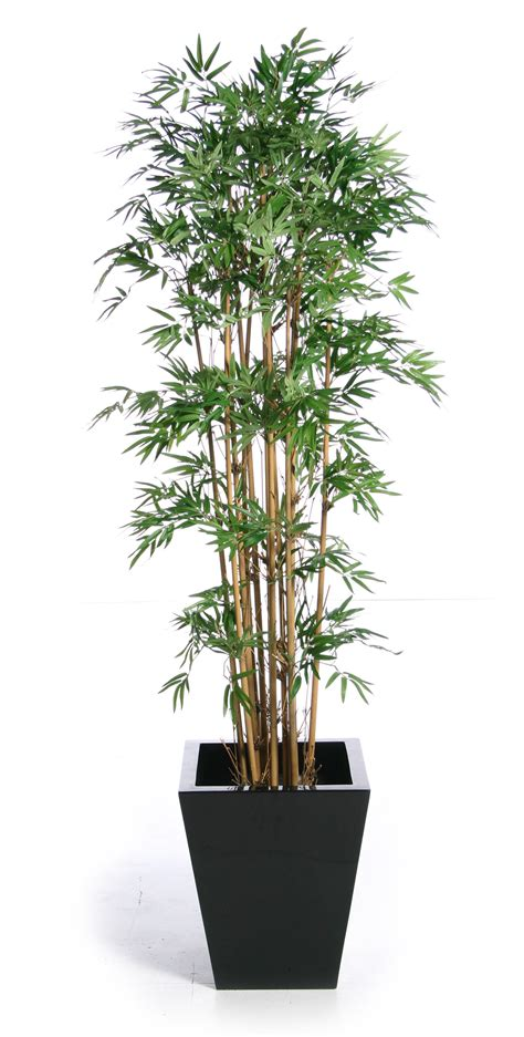 Plants In Nanopics Artificial Plants. Round Living Room Furniture. Cool Curtains For Living Room. Jcpenney Living Room Sets. How To Interior Decorate My Living Room. French Living Room Ideas. Printed Curtains Living Room. Best Living Room Lighting. Small Living Room Ideas With Hardwood Floors