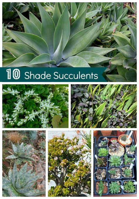 shade plants washington state 25 b 228 sta succulent wall gardens id 233 erna p 229 pinterest suckulenttr 228 dg 229 rd vertikala tr 228 dg 229 rdar