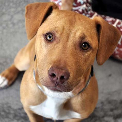 sw states pets  rescue  kill shelters