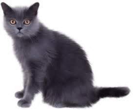 Cat clip art free clipart images Views: 61 Downloads: 1 1024 x 728 ...