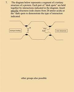 Solved  The Diagram Below Represents A Segment Of A Tertia