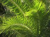 Images of What Is Palm Oil