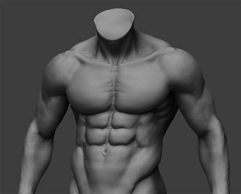 pin  joshua quiambao  cg references anatomy