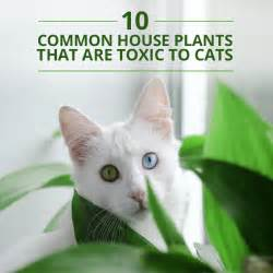 plants poisonous to cats dangerous plants for cats and dogs breeds picture
